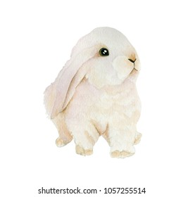 Bunny Watercolor painting. Watercolor hand painted cute animal illustrations.