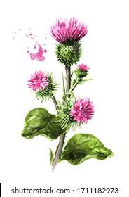Fleurs de Burdock avec feuilles vertes, plante médicale. Illustration à l'aquarelle dessinée à la main, isolée sur fond blanc