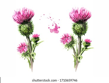 Burdock flowers set, medical plant. Hand drawn watercolor illustration, isolated on white background