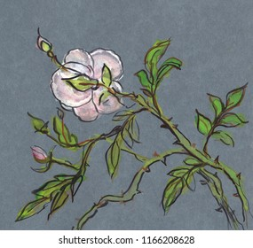 Bush with lonely pink rose and buds