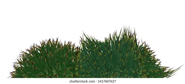 Bushes isolated on white 3D Rendering