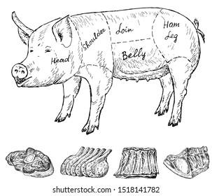 Butchery set. Illustration. Vintage design with hand drawn sketch. Line art style. Raster copy.