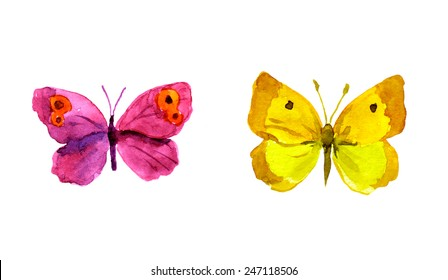 Butterflies. Watercolor