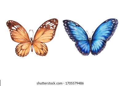 butterflies watercolor hand-drawn blue and yellow illustration separately on a white background insects flying wings wildlife. For ornaments invitations greetings background wallpaper textile print