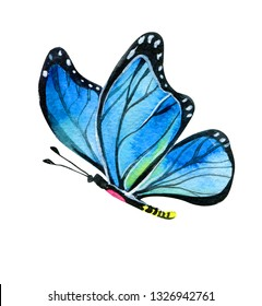 Butterfly blue realistic watercolor illustration isolated on white. Nice butterfly illustration blue and black.