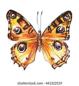 Butterfly, Buckeye butterfly, Junonia Almana, Peacock Pansy. Watercolor butterfly