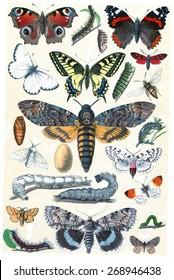 Butterfly collection, vintage engraved illustration. La Vie dans la nature, 1890.
