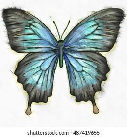 Butterfly Stock Vector Royalty Free 115497928 Shutterstock