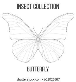 Butterfly insect geometric lines silhouette isolated on white background vintage design element illustration