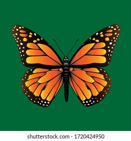 butterfly monarch on green background