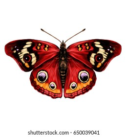 butterfly with open wings top view of symmetry, sketch the graph of color drawing butterfly with red wings