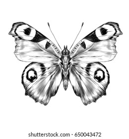 butterfly with open wings top view, the symmetrical drawing, graphics sketch black and white drawing
