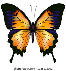 Butterfly. Orange and yellow butterfly isolated illustration on white background. Nonexistent butterfly zoology specimen