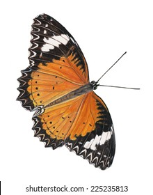 butterfly painting/water color