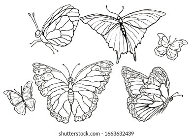 butterfly set made in the style of a thin line contour