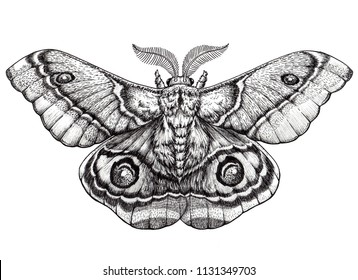 Butterfly tattoo art. Dotwork tattoo. Antherina suraka. Madagascar bullseye moth. Mystical symbol of freedom, nature, beauty, perfection