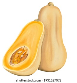 Butternut Squash Vegetable Digital Illustration