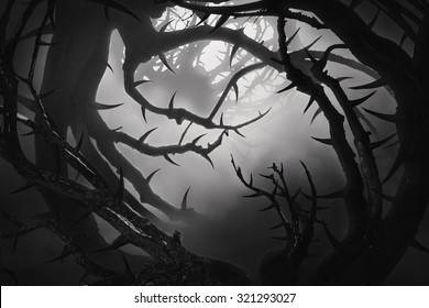 bw dark forest with thorny bushes in fog at night