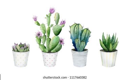 Cacti in the pot.