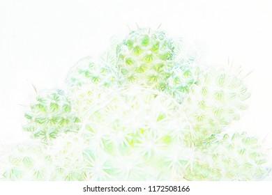 Cactus in drawing design