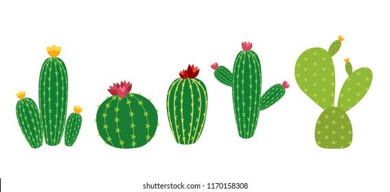 Cactus Icon Collection Set  Illustration