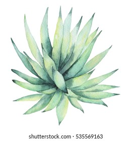Cactus isolated on a white background. Watercolor hand drawn illustration.