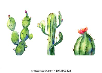 Cactus plants isolated on white background. Watercolour