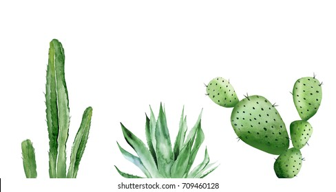Cactus set and agave plant. Watercolor illustration on white.