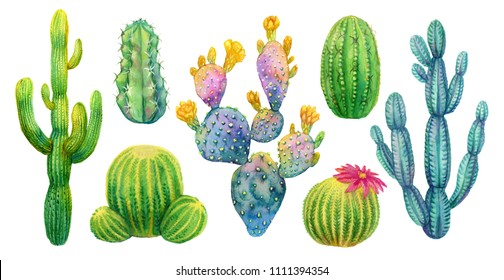 Cactus set, hand painted watercolor isolated cacti. Saguaro, opuntia, cereus and other.