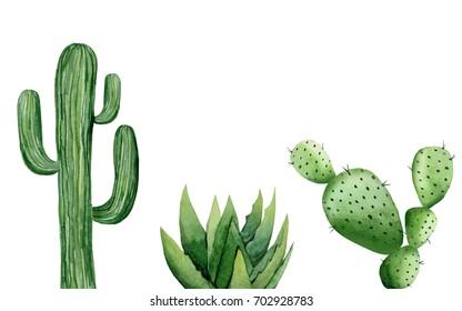 Cactus set. Watercolor illustration on white.