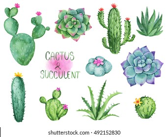 Cactus and succulent watercolor clipart set. Hand drawn illustrations