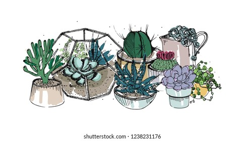 Cactus and succulents composition. Collection plants in pots, florarium. Colorful hand drawn illustration in sketch style, isolated on white background.