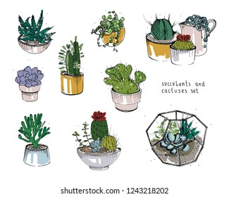 Cactus and succulents set. Collection plants in pots, florarium. Colorful illustration hand drawn in sketch style, isolated on white background.
