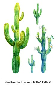 Cactus watercolor illustration. Saguaro blooming on white background.