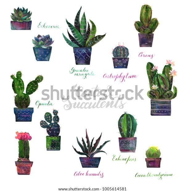 Cactuses Cacti Succulents Pots Set Watercolor Stock Illustration