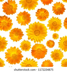 Calendula on a white background. Medicinal plants. Healing herb. Seamless pattern with flowers of marigold
