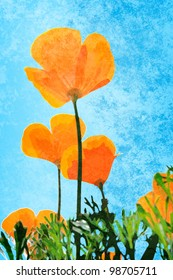 California Poppies on a bright sunny day with grunge style texture