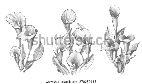 Calla Lily Flower Bouquet Pencil Drawing Stock Illustration 270250115