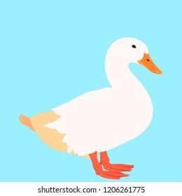 Calm white duck on the aqua color background