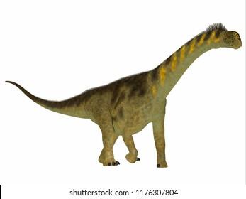 Camarasaurus Dinosaur Side Profile 3D illustration - Camarasaurus was a herbivorous sauropod dinosaur that lived in North America during the Jurassic Period.