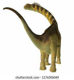 Camarasaurus Dinosaur Tail 3D illustration - Camarasaurus was a herbivorous sauropod dinosaur that lived in North America during the Jurassic Period.