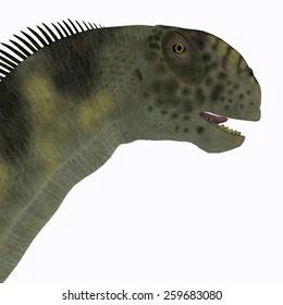 Camarasaurus Head - Camarasaurus was a herbivorous sauropod dinosaur that lived during the Jurassic Era of North America.