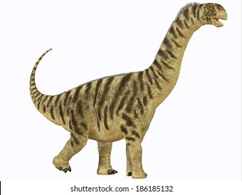 Camarasaurus Juvenile - Camarasaurus was a sauropod dinosaur that lived in North America in the Jurassic Age.