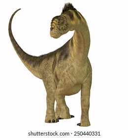Camarasaurus on White - Camarasaurus was a sauropod herbivore dinosaur that lived in the Jurassic Era of North America.
