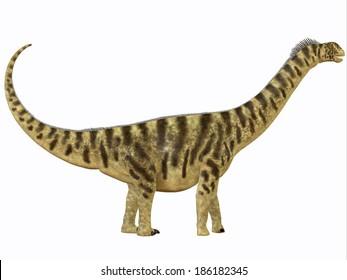 Camarasaurus Profile - Camarasaurus was a sauropod dinosaur that lived in North America in the Jurassic Age.