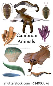 Cambrian Animals 3d illustration - A collection of various animals and microbes that lived during the Cambrian Age of Earth's history.
