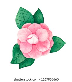 Camelia  illustration watercolor