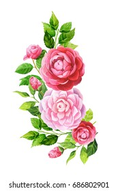 Camellia flowers and leaves arrangement composition. Watercolor illustration.