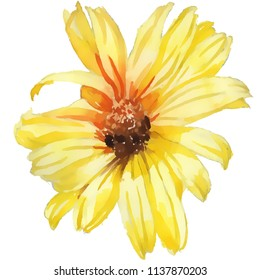 Camomile yello flower, hand drawing watercolor illustration