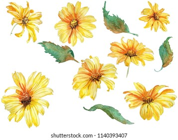 Camomile yellou flower, hand drawing watercolor illustration